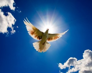 dove-bird-for-world-peace